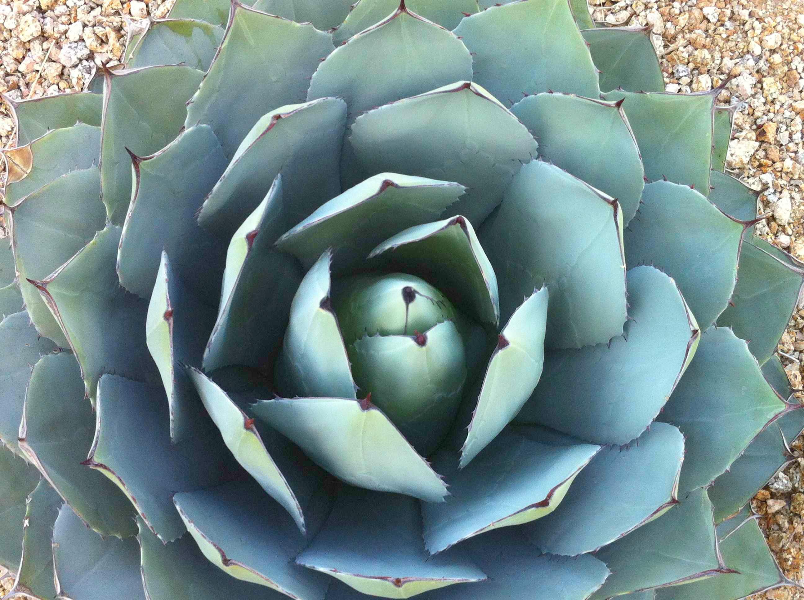 flora + fauna :: arizona | lotus events